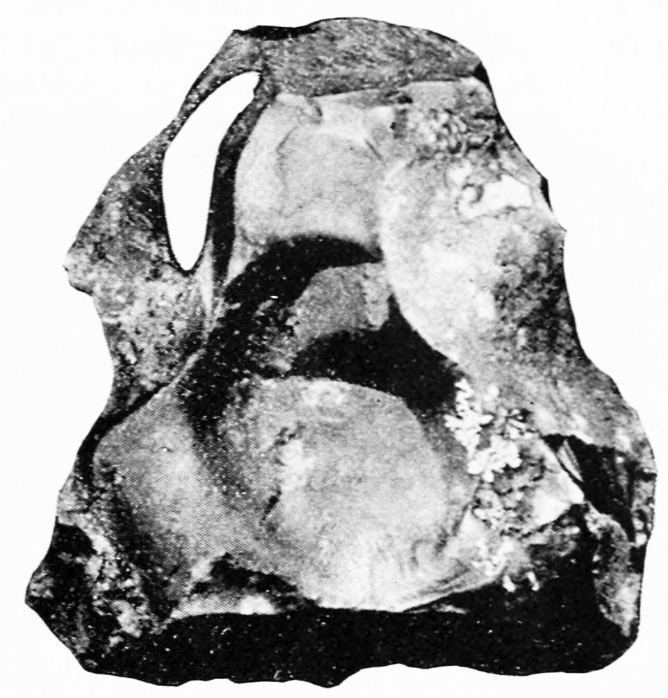 PSM V43 D687 Nodule of jasper flaked on one side from long swamp.jpg