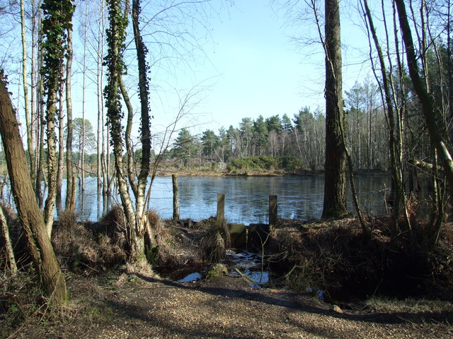 Pond in Avon Heath Country Park - geograph.org.uk - 1737553