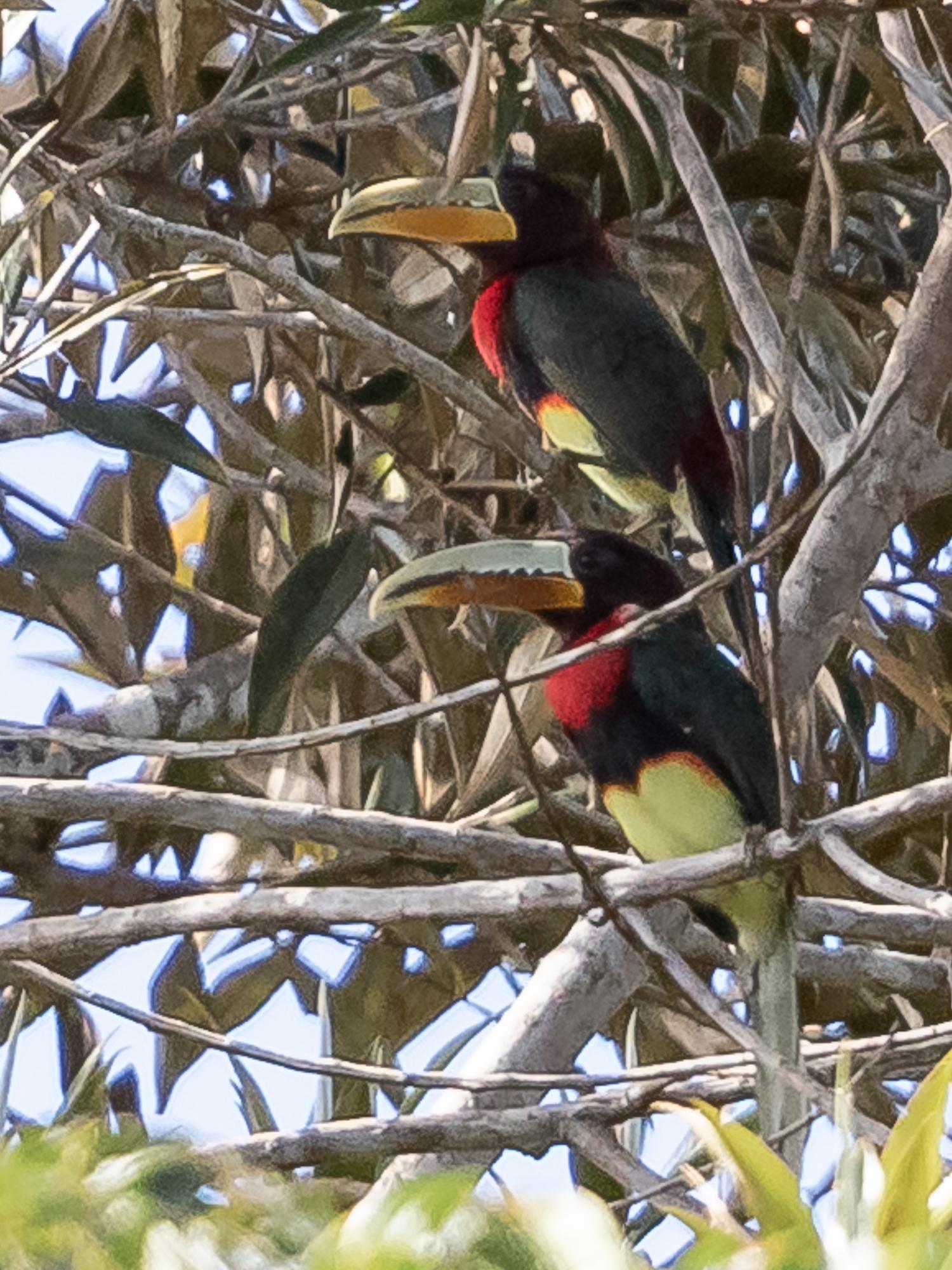 Beruri Amazonas fonte: upload.wikimedia.org