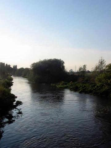 File:River Tern CB.jpg