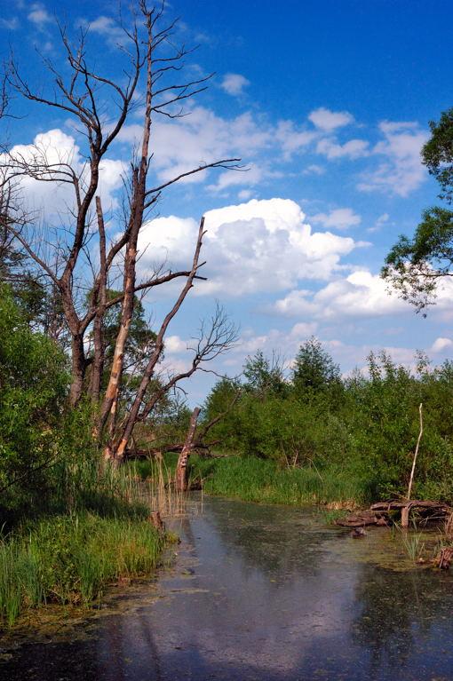 Zona umida nei pressi del fiume Rudava (Slovacchia)