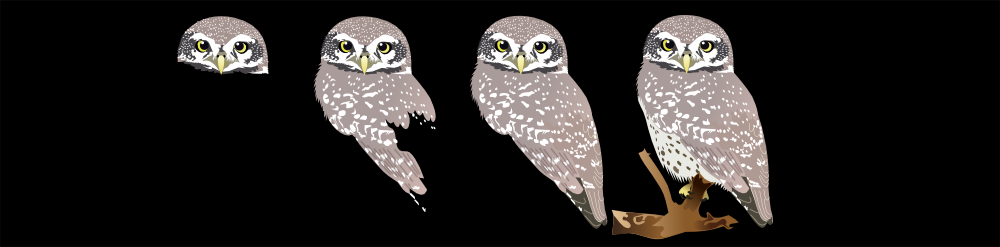 Spottes Owlet-making