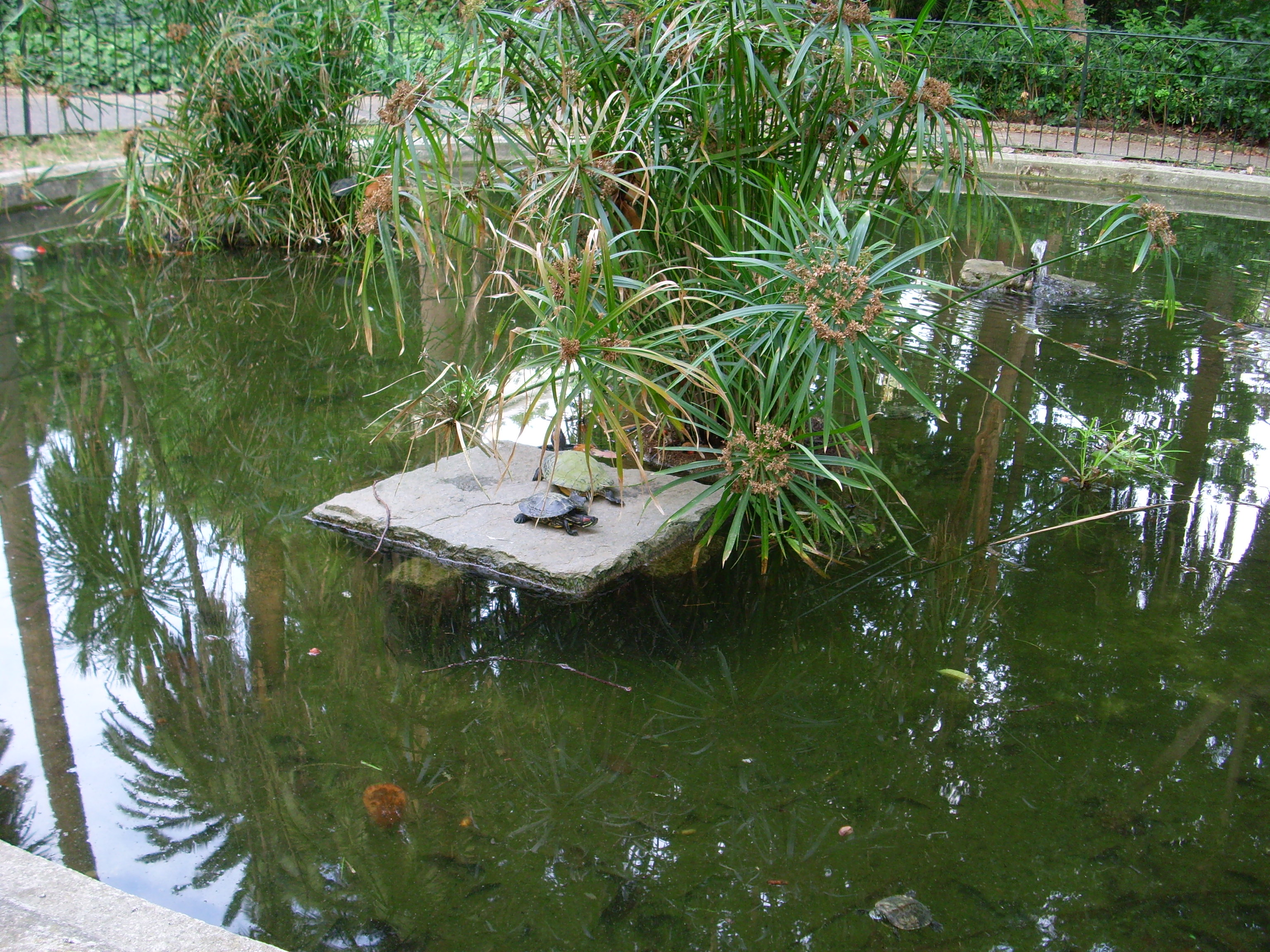 File tartarughe parchi di wikimedia commons for Parchi di nervi