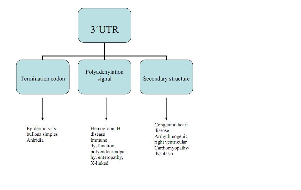 UTR (genética) - Wikipedia, la enciclopedia libre