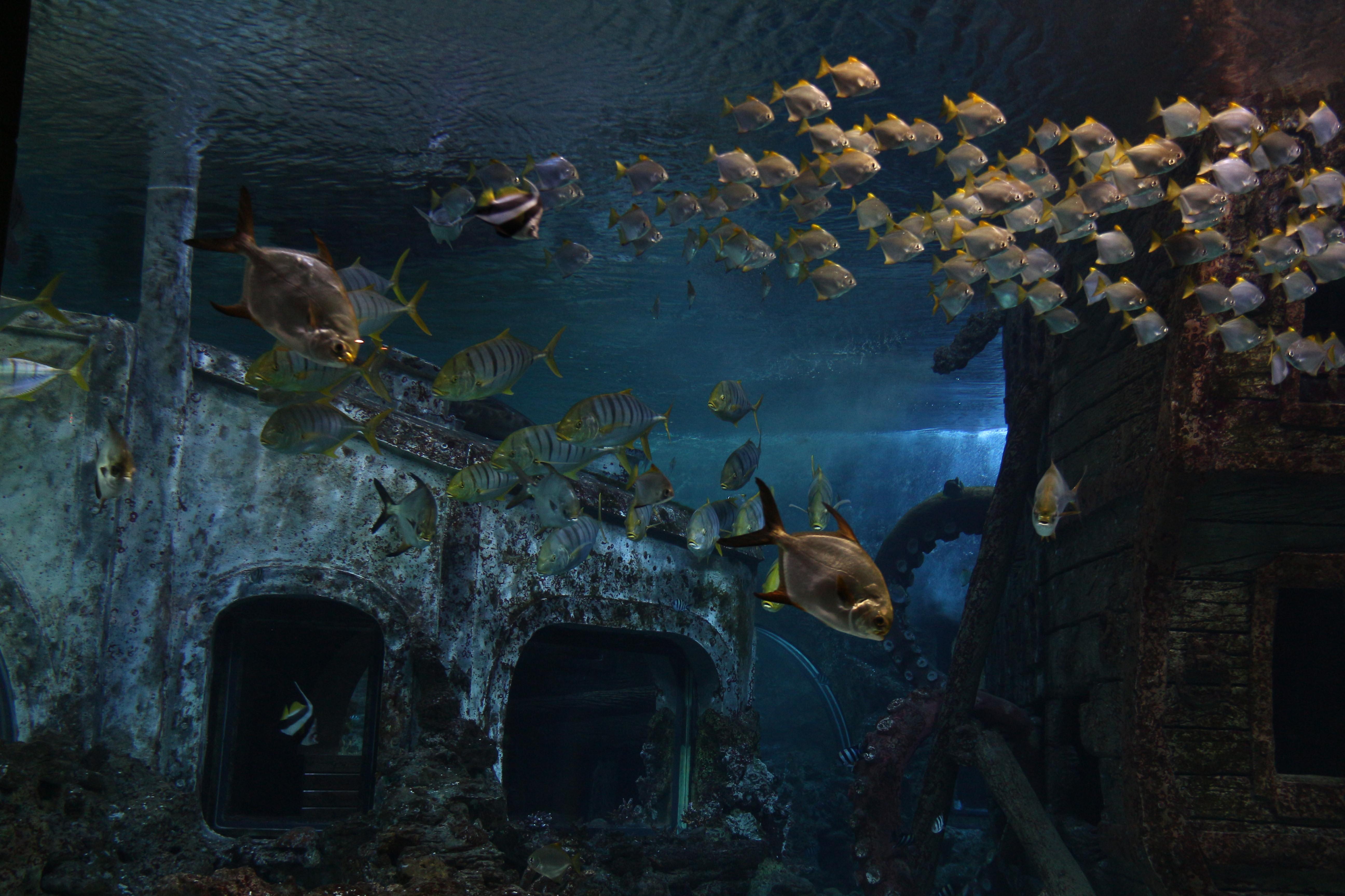 еще воронеж океанариум фото тока этих