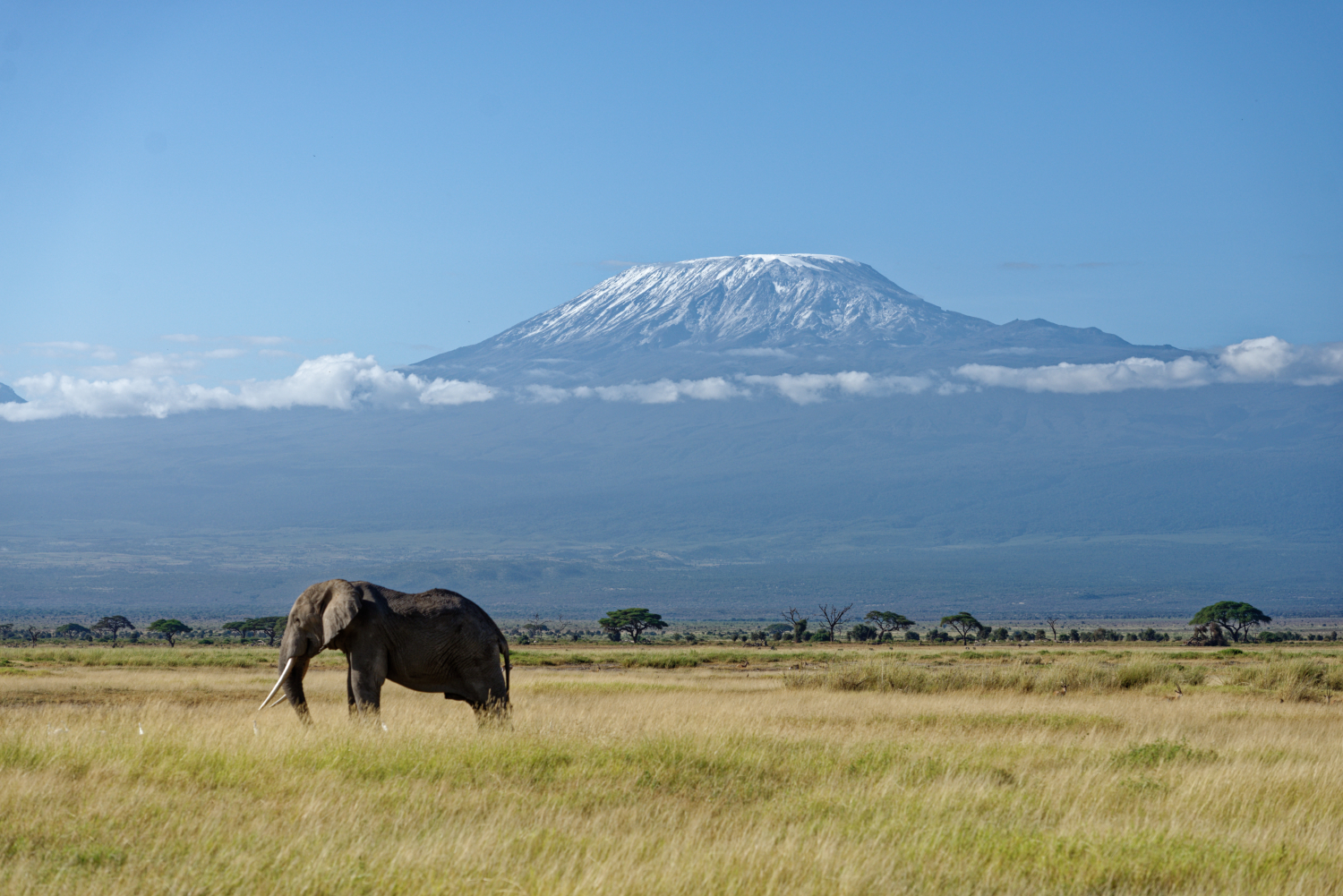 IFAW Secures 29,000 Acres of Wildlife Habitat in Kenya With Community Support