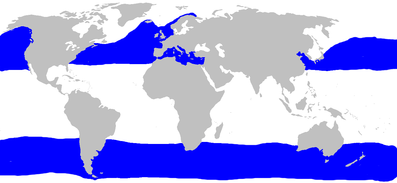 Tiburón Peregrino  Basking_shark_distribution