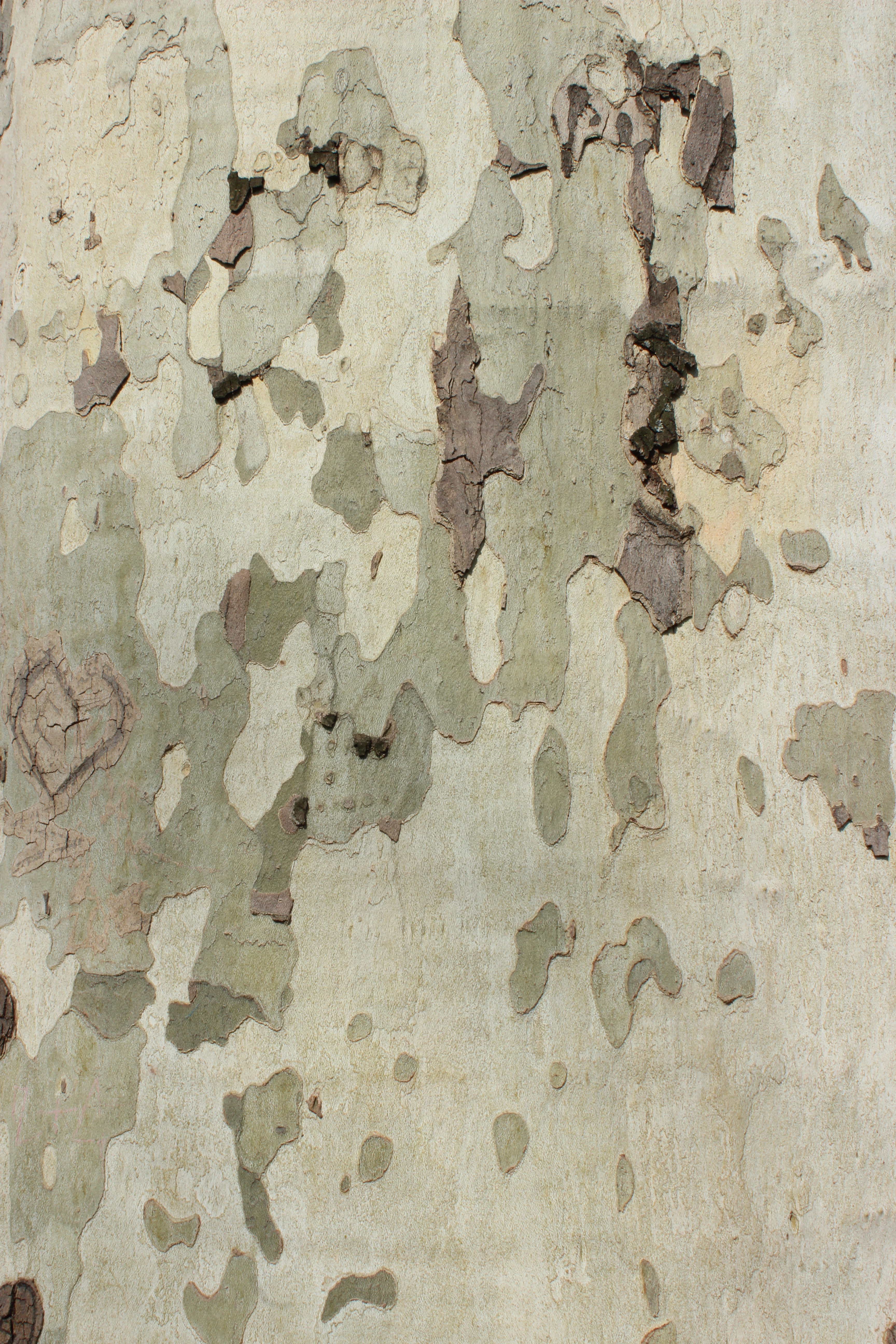 mons challenge 2014 March Surface textures Wikimedia