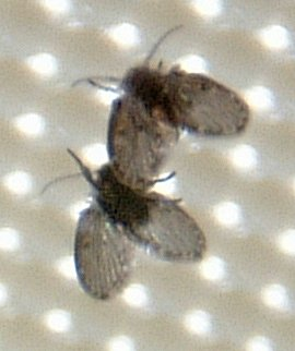 Bathroom on File Bathroom Fly Or Moth Jpg   Wikipedia  The Free Encyclopedia