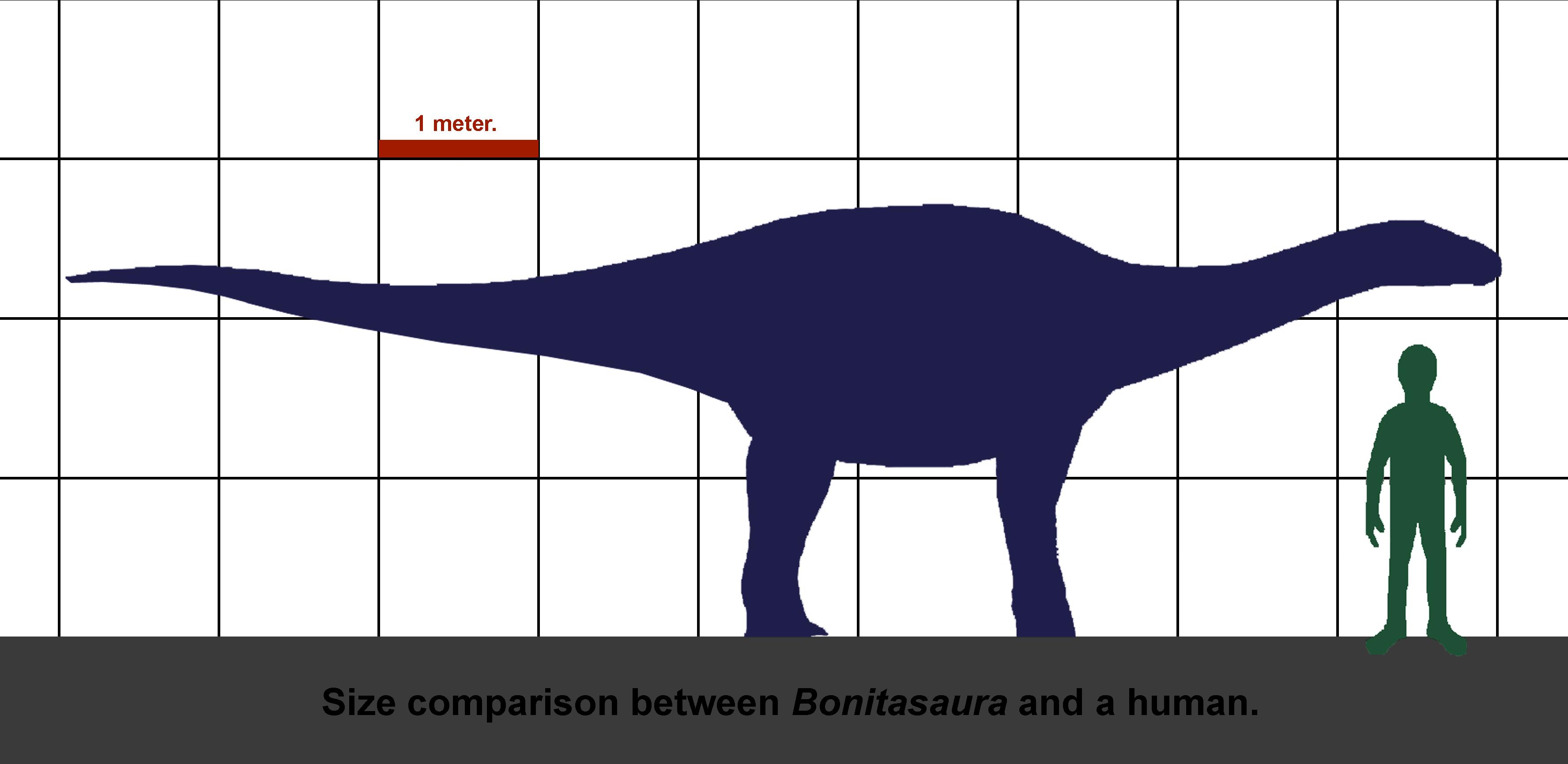 File:Bonitasaura-human size.jpg - Wikimedia Commons