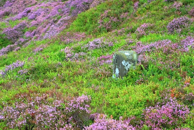 Boundary Stone, Easby Moor - geograph.org.uk - 942288