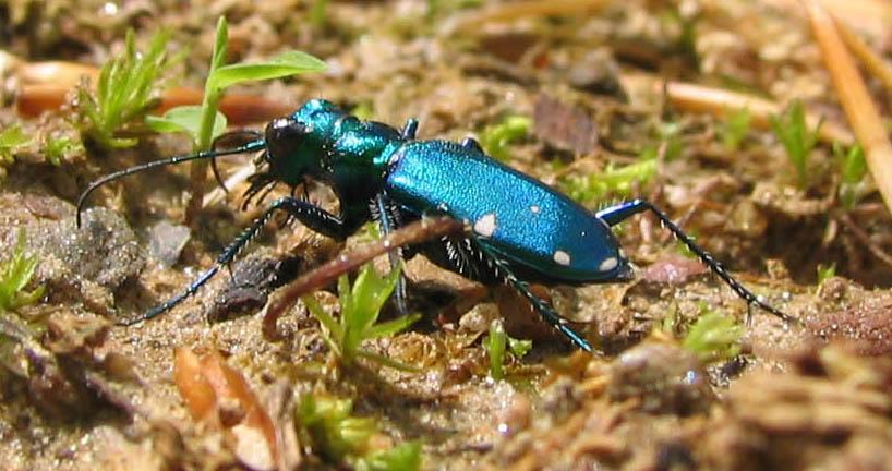 Image Result For A Blue Beetle