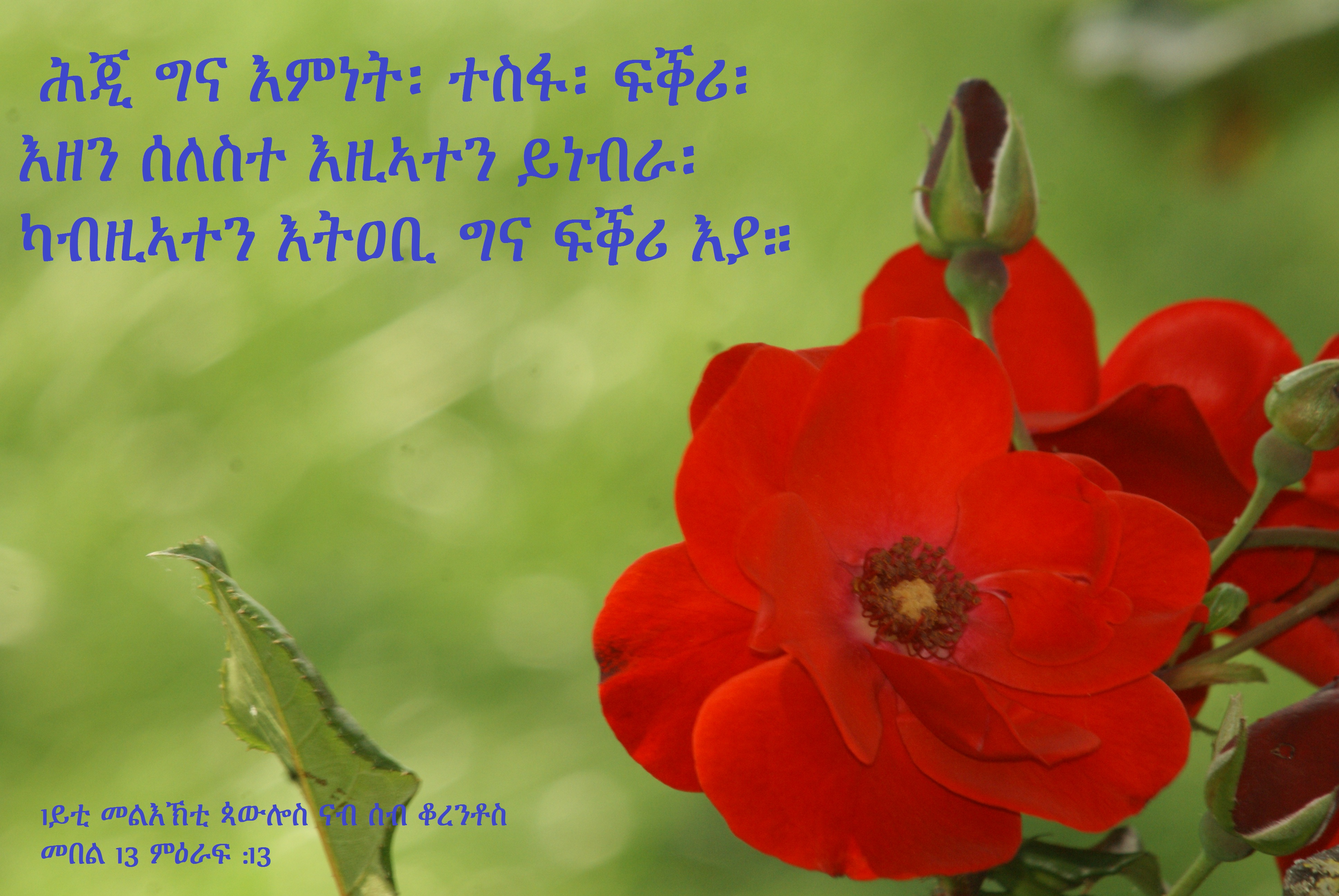 File:eritrean bible verses (12). Jpg wikimedia commons.