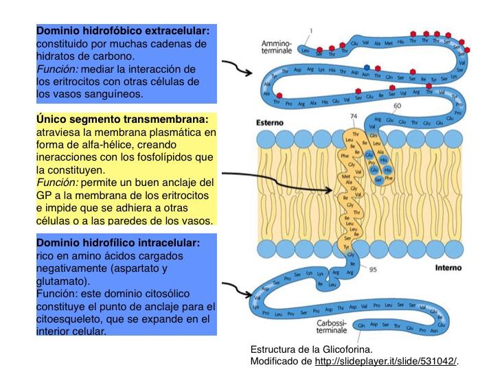 Interacciones electrostaticas en protein as para bajar de peso