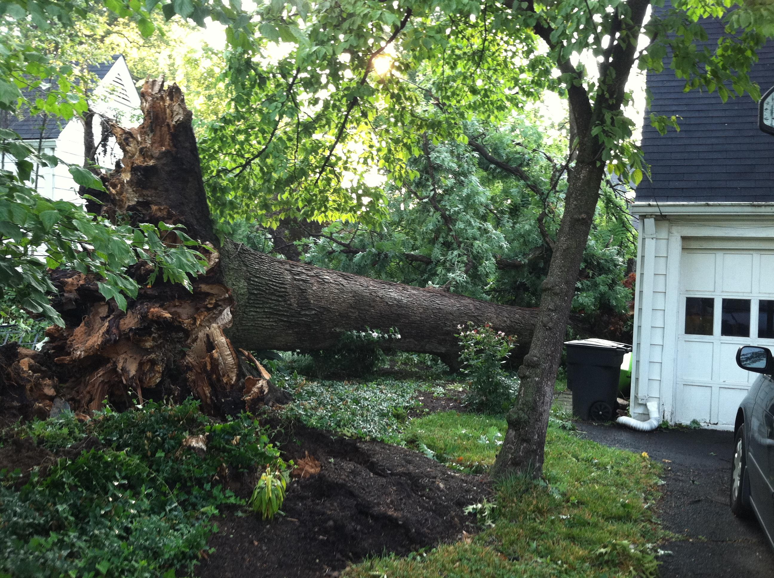 Reduce the Risk of Property Damage with Tree Trimming and Removal Services