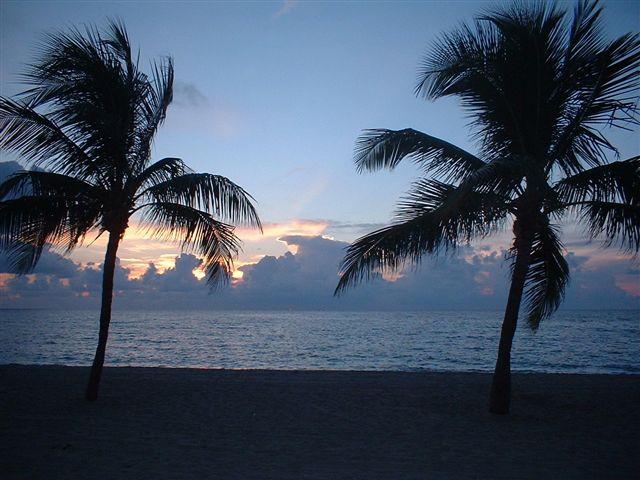 FileFort Lauderdale Beach Nightjpeg