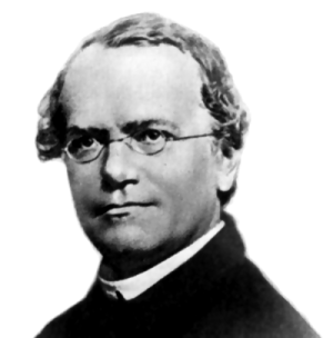 Gregor Mendel (Source: Wikimedia Commons.)