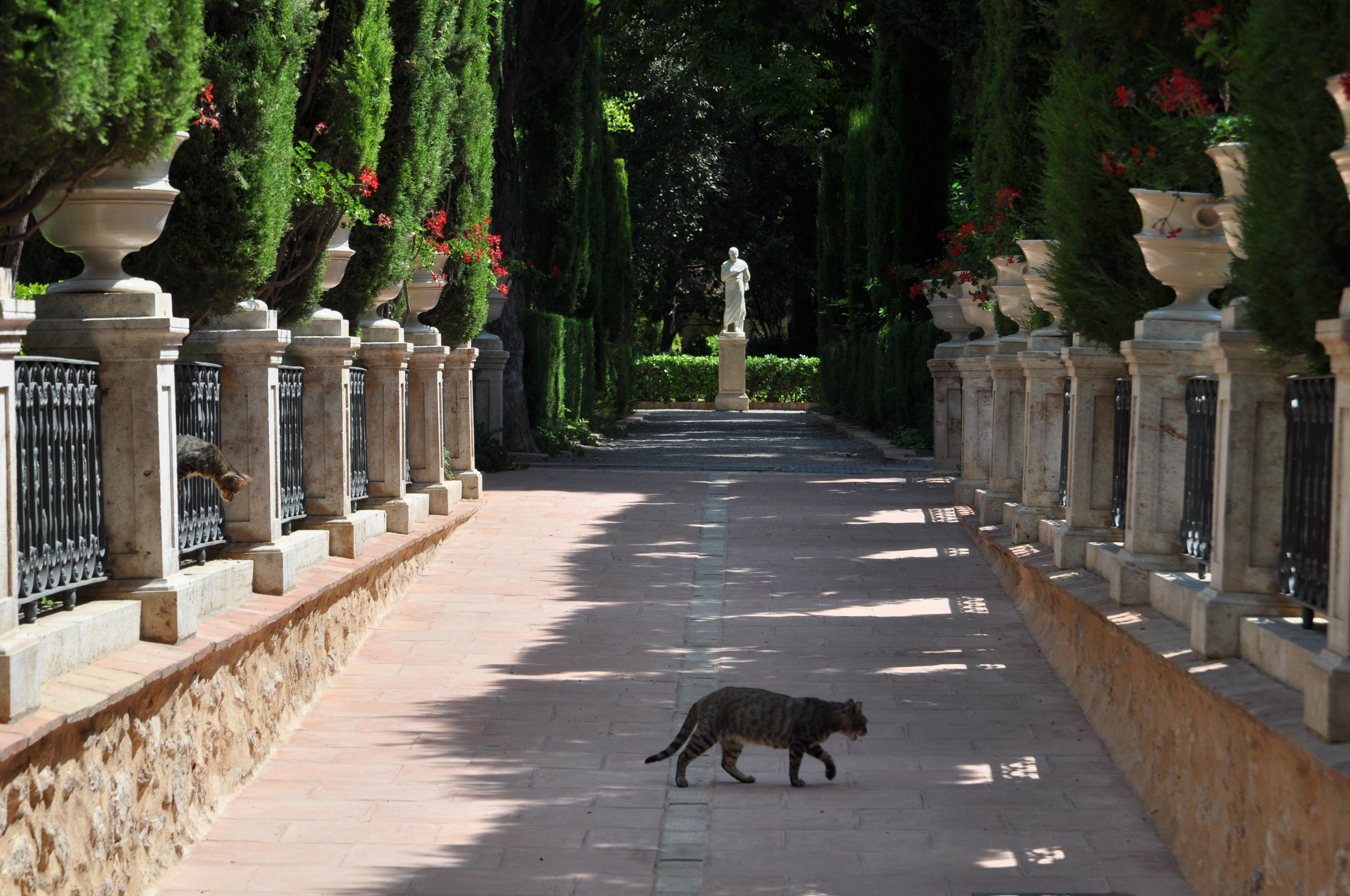 File jardines de monforte valencia jpg wikimedia commons for Jardines de tabarca valencia