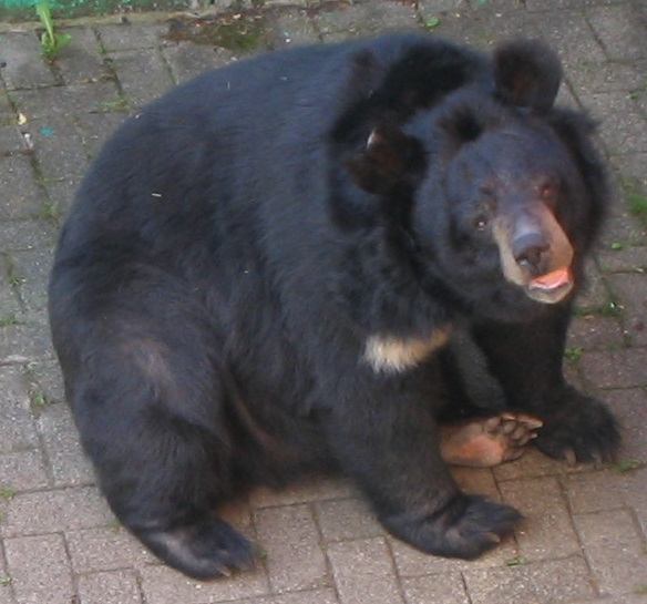 Black Bear Natural Casing Hot Dogs