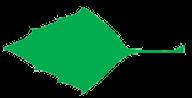 feuille triangle et son apex pointu