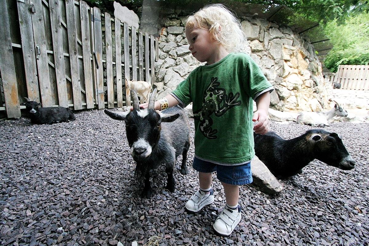 Petting zoo - Wikipedia