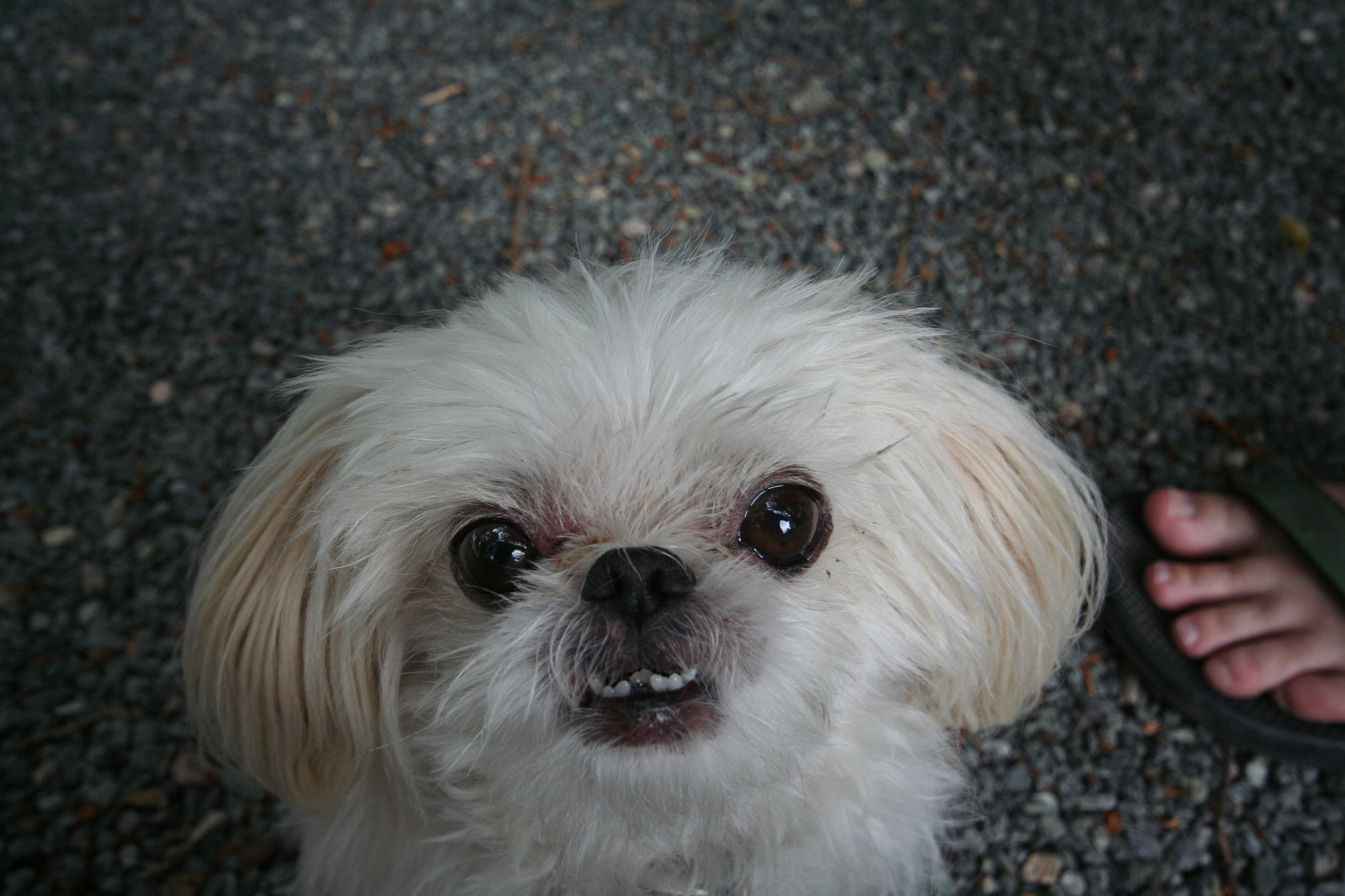 Hypallergneic Dog Breeds