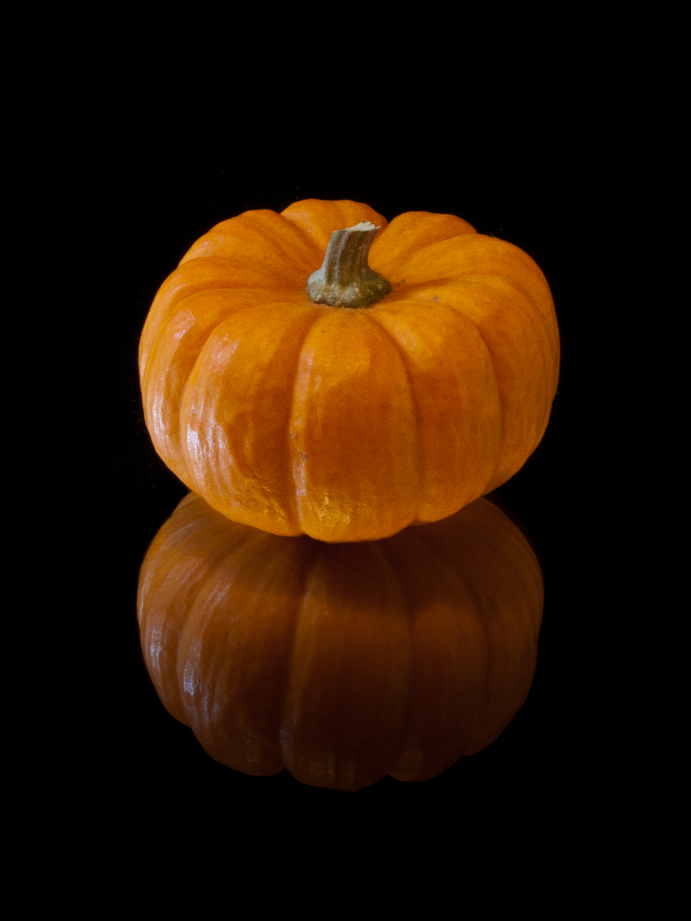 history of pumpkins A pumpkin is a gourd-like squash that grows on vines it is cultivated for its large pulpy round orange fruit with firm orange skin, and numerous seeds there is a.