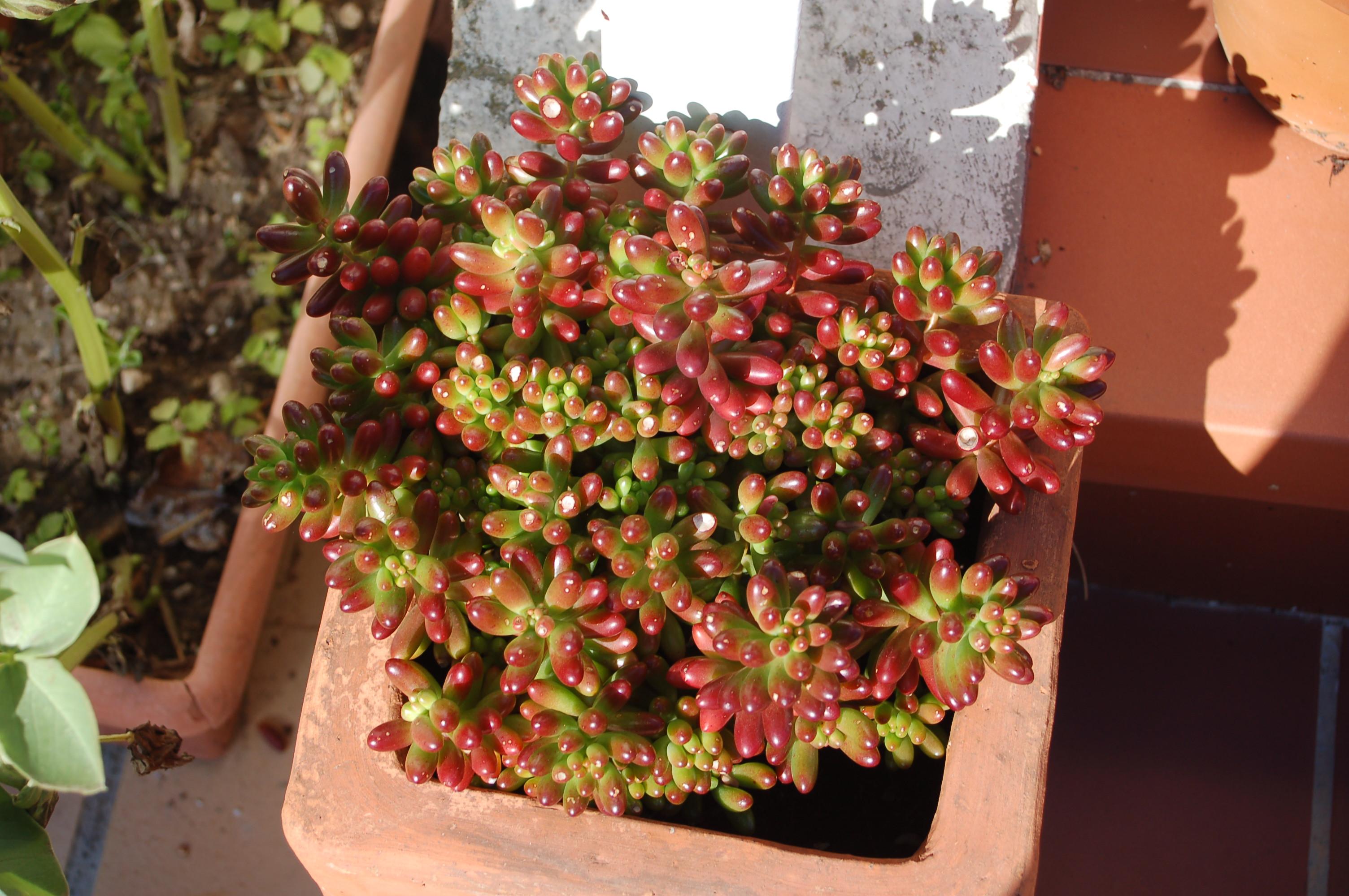 Votre potager urbain au bureau dans la rue sur le toit for Plante en pot pour terrasse