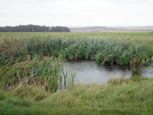 Pond along the Minster Way - geograph.org.uk - 664020