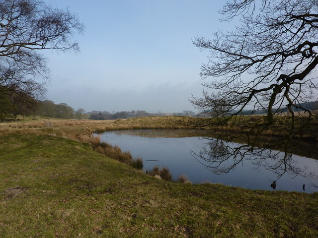 Pool and overhanging tree in Lyme Park - geograph.org.uk - 1742734
