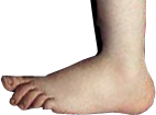 https://upload.wikimedia.org/wikipedia/commons/d/d3/Python-Foot.png