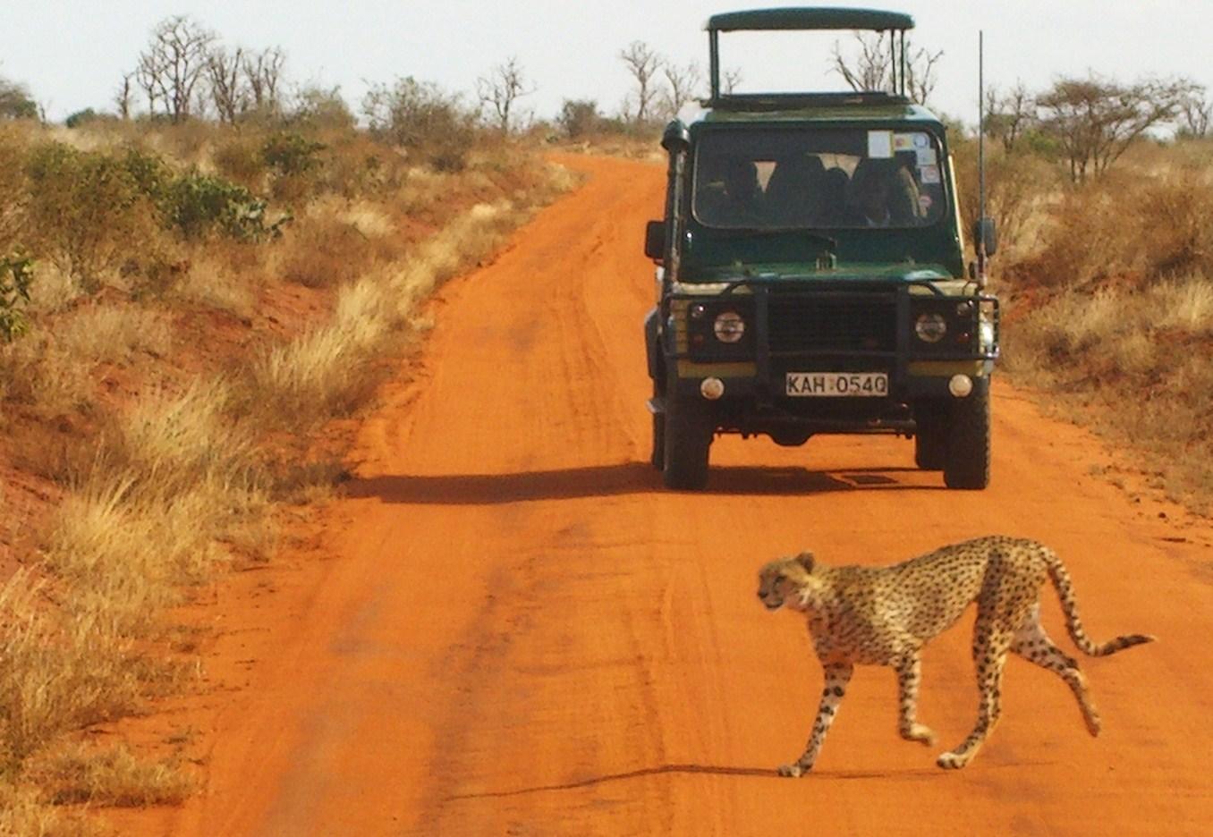 South Africa Safari Hotel Rooms