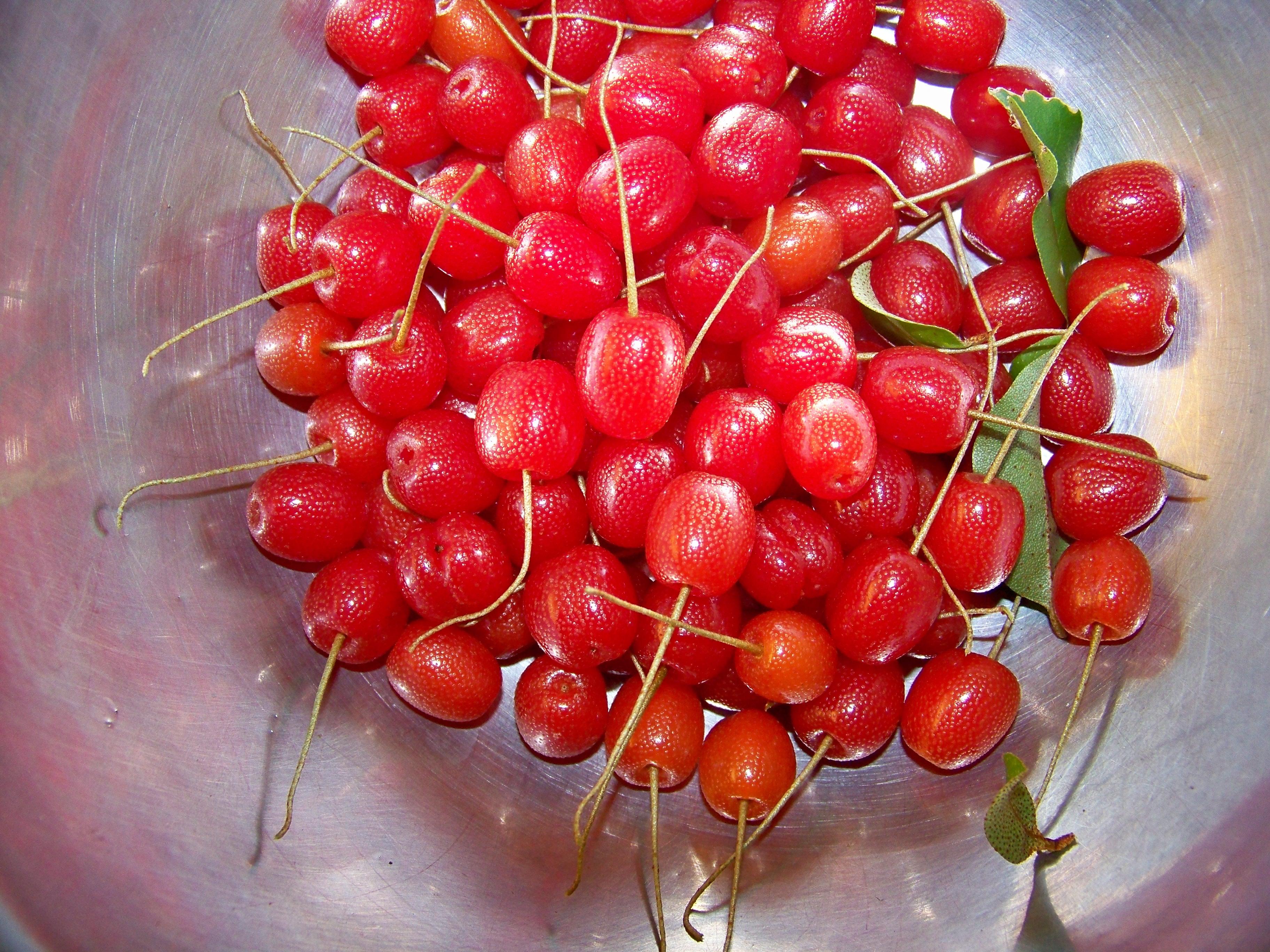 silverberries1.jpg