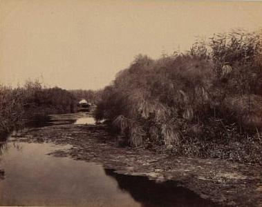 File:Sommer, Giorgio - Siracusa - Il fiume Anapo e il papiro1.jpg