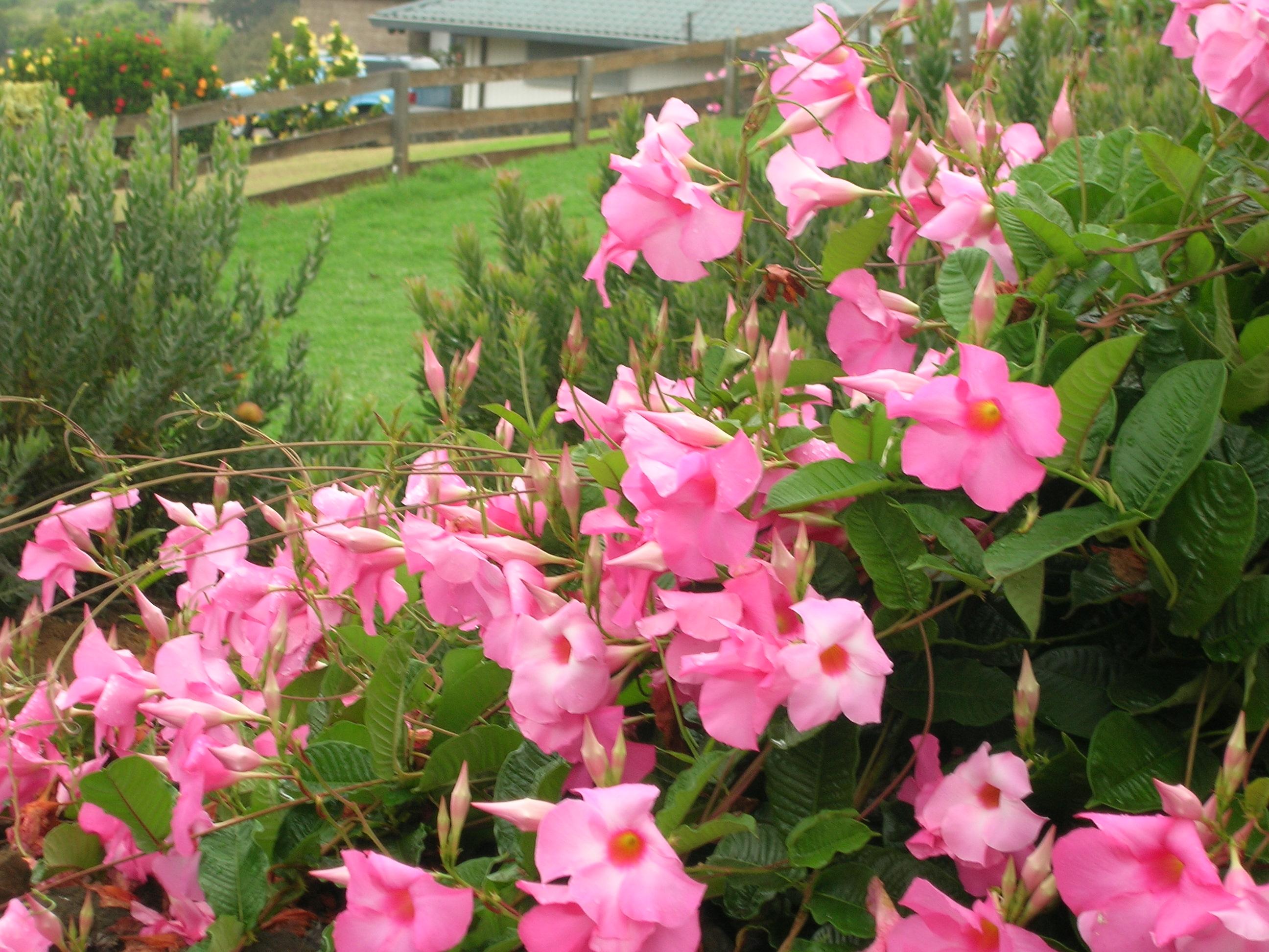 Villa Sweet Rose