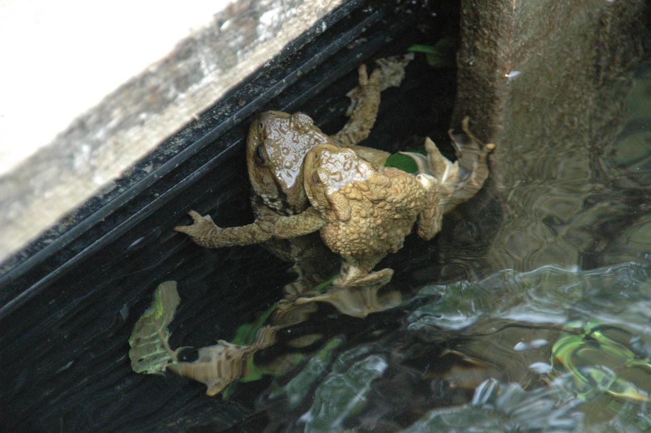 Toad Sex 110