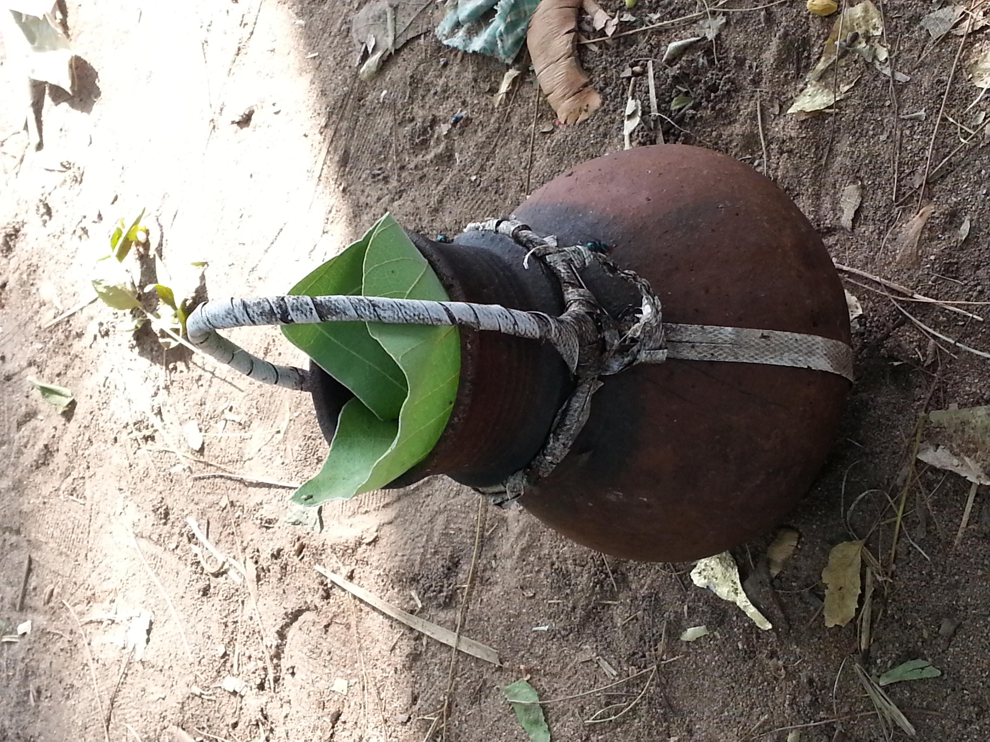 Toddy Pot I Kerala's Drinking Problem