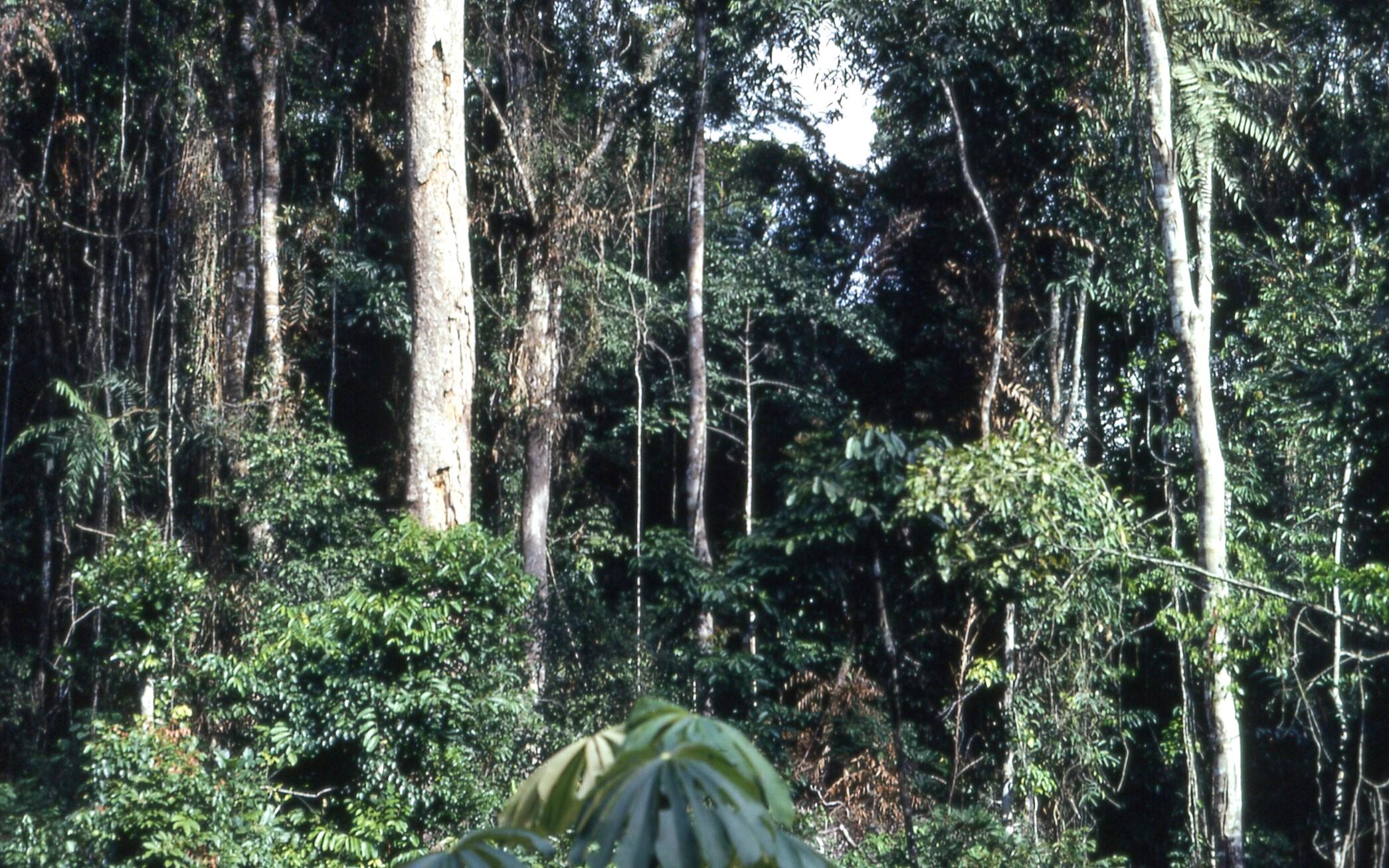 filetropical rainforest near konimbo liberia west