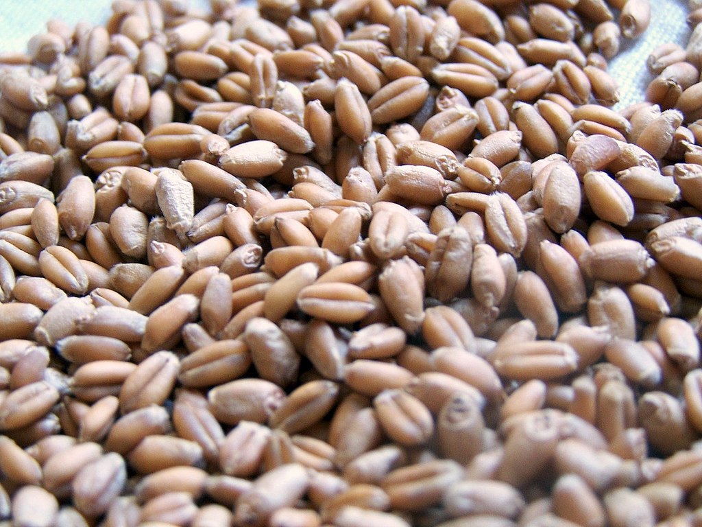 Wheatberries.jpg