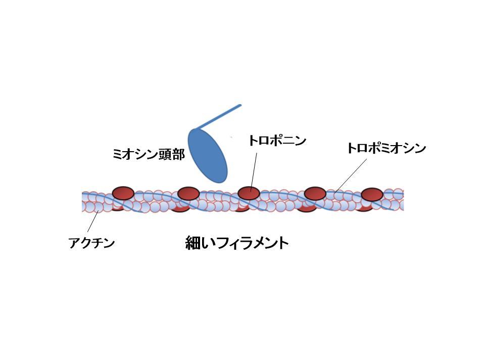 細いフィラメントモデル.jpg