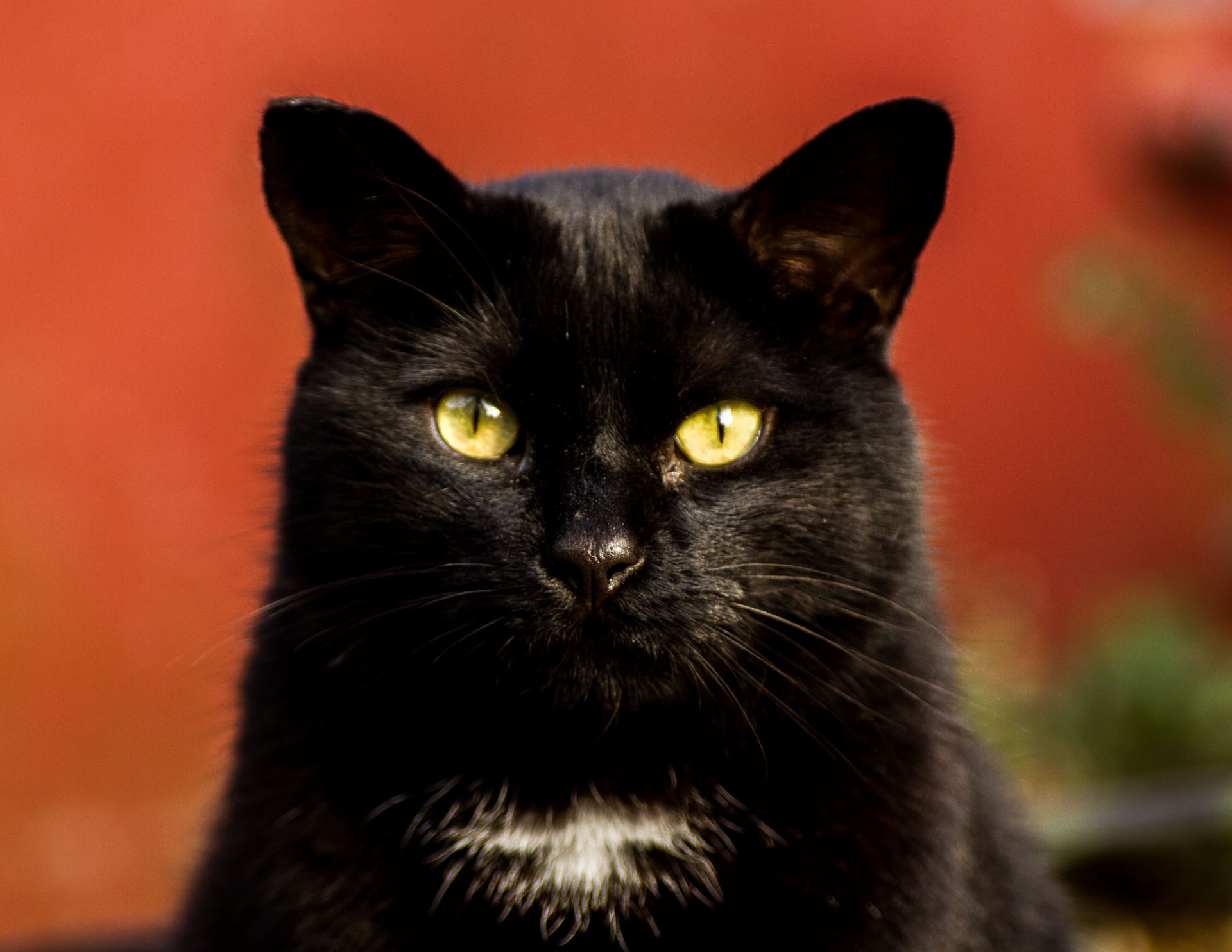 Black Cat Staring At Me
