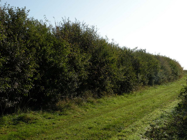 File:Another footpath to Great Wilbraham - geograph.org.uk - 1016976.jpg