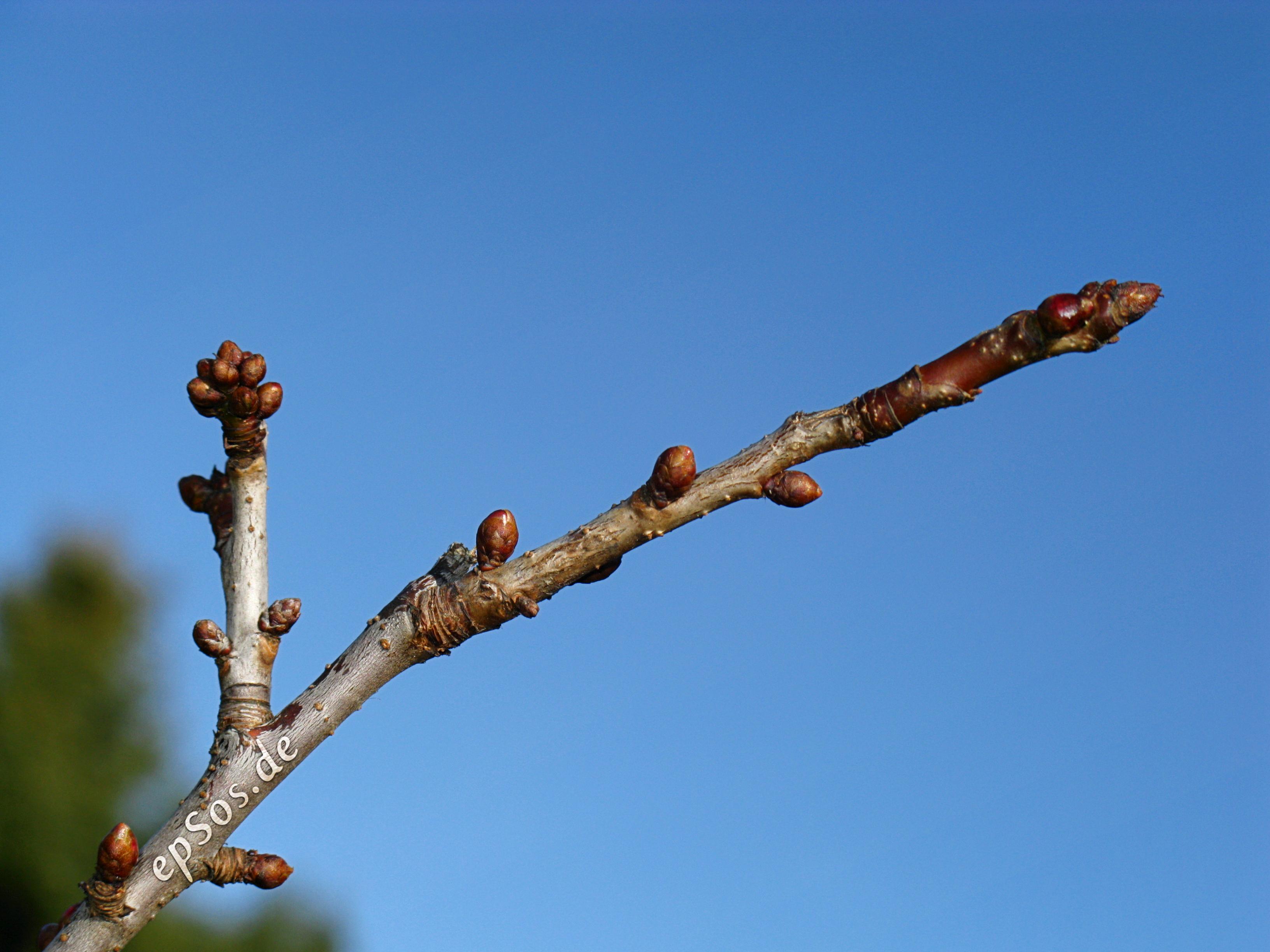 file blue sky growing a tree branch in the garden of success jpg