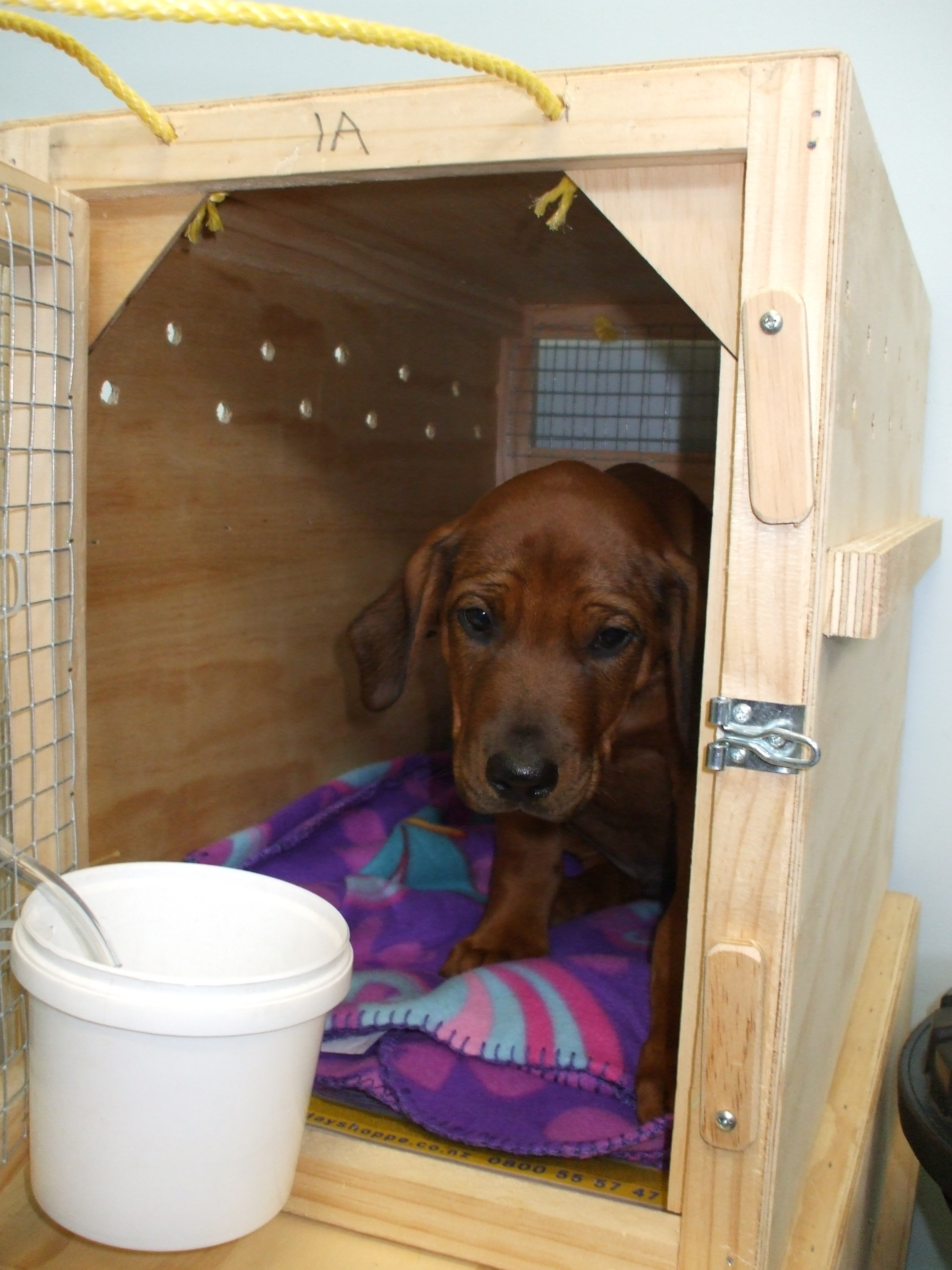 Dog Kennels In Cheadle Stoke On Trent
