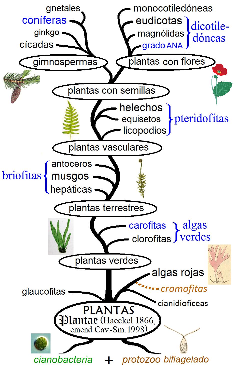 Historia evolutiva de las plantas Wikiwand