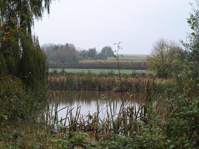 File fish pond lower durston 1585521 for Pond fish uk
