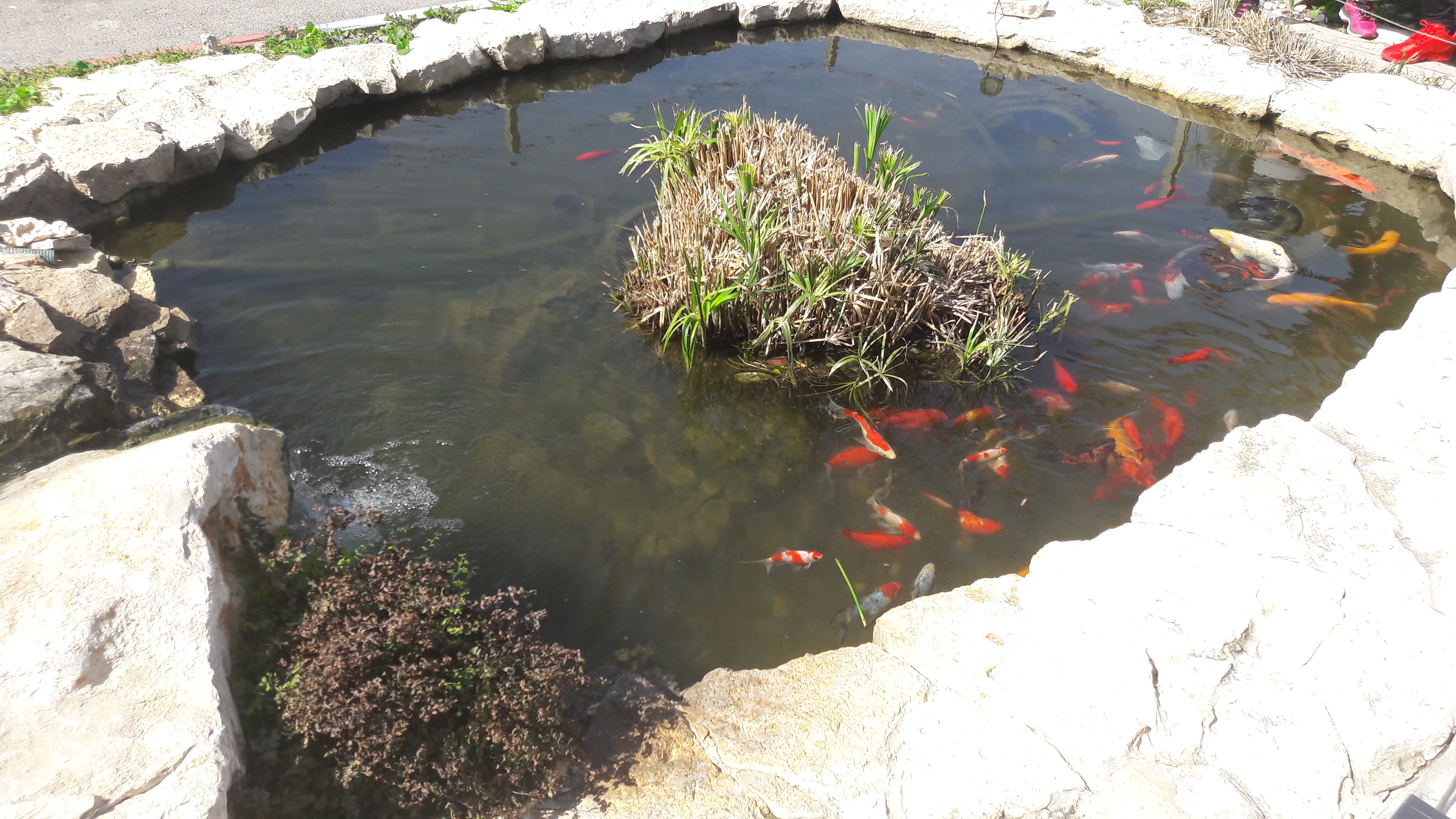 File fish pond near the commercial center shefayim israel for Ponds to fish in near me