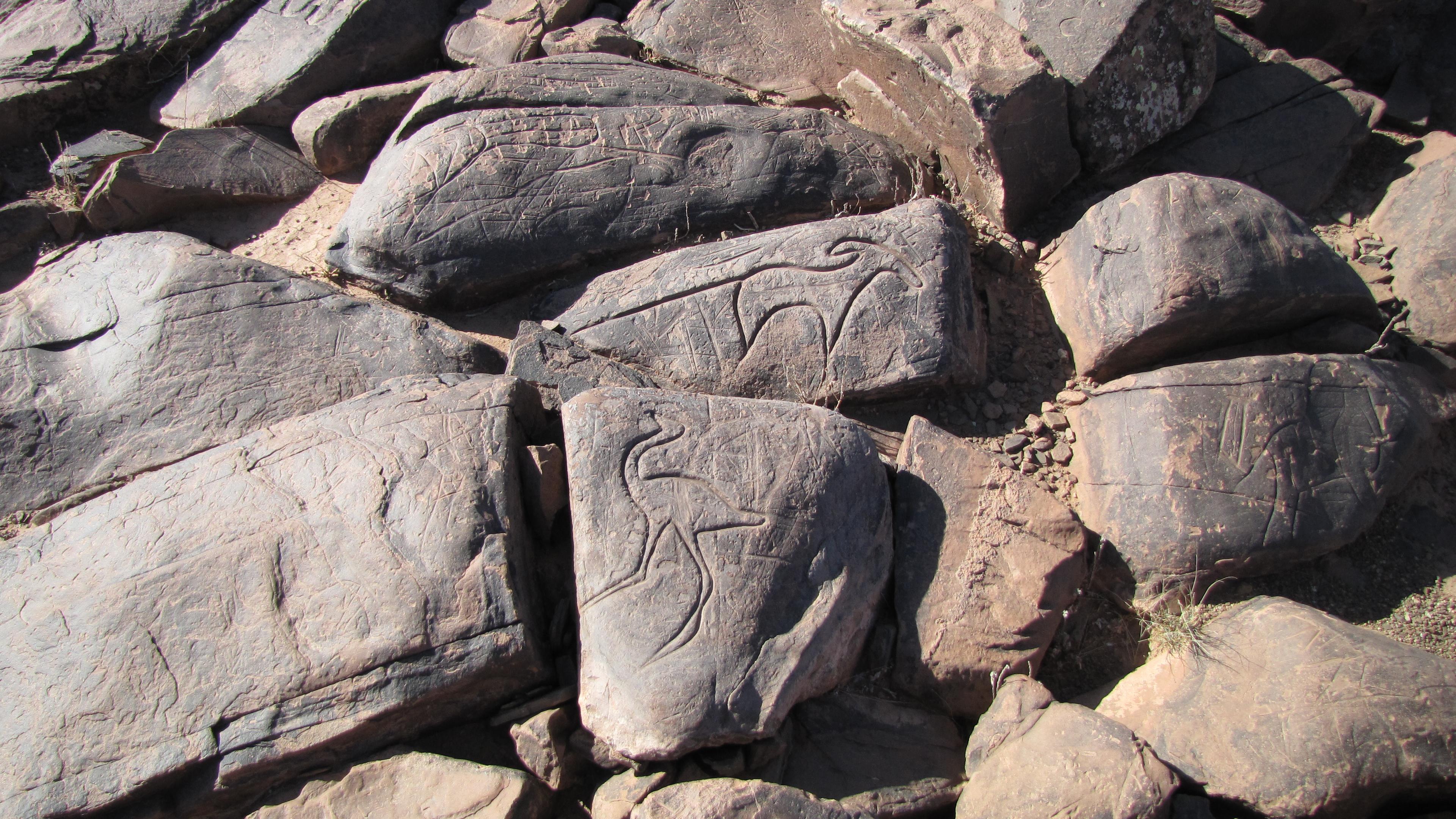 Gravures rupestres d'Ait ouaazik Gravure_rupestre_1