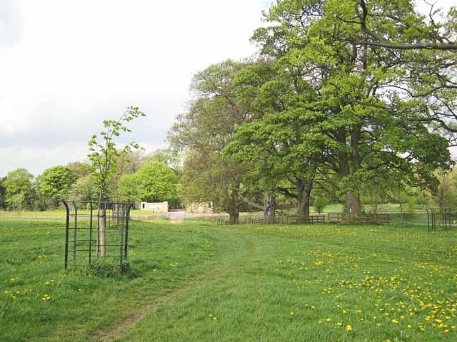 Hardwick Park - geograph.org.uk - 425216