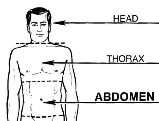 2400 in addition N1282010 together with File Human head Thorax Abdomen further Bats additionally Clipart Hands Up. on head size